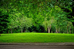 Green Park. Green grass on the park Royalty Free Stock Image