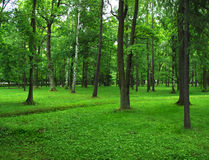 Green park. Summer forest, grass meadow and trees Stock Image