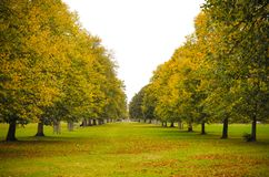 Green park during autumn surrounded by trees in London, United Kingdom stock images