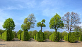 Green Park Background Royalty Free Stock Images