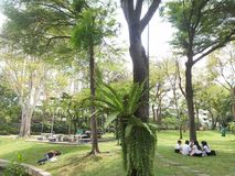 Green park at bangkok Royalty Free Stock Photography