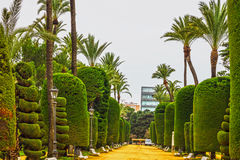 Green park, Cadiz, Spain. Genovese garden Stock Photos