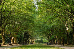 Green park. City Park Pathway threw big trees Stock Photos