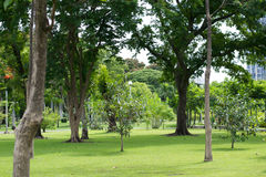 Green Park with a couple trees. Public park in the daylight with couple trees. there is a rich lawn in a bottom and trees in the sides Royalty Free Stock Photos