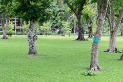 Green Park , couple trees , rich lawn. Public park in the daylight with couple trees. there is a rich lawn in a bottom and trees in the sides Stock Photo