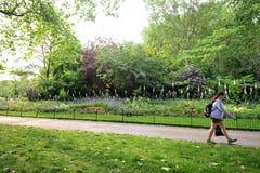 Green Park, es uno de los parques reales de Londres Est? situado en la ciudad de Westminster, Londres central foto de archivo libre de regalías