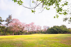 Green park  landscape and grass field Royalty Free Stock Photo