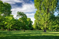 Green park with lawn and trees in a city stock photos