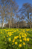 Green Park in London at Spring Royalty Free Stock Photos