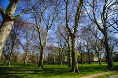 Green park, London, UK. The beginning of spring season at Green Park, London, UK - showing leafless tree in the park during sunny day Stock Photography