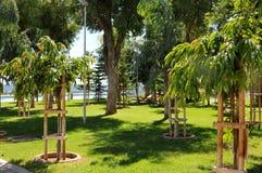 Green park in modern promenade -  Limassol, Cyprus Royalty Free Stock Photo