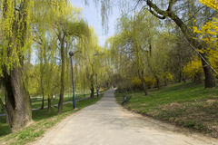 Green park in residential area Stock Photo