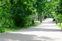 Green park with road, trees alley royalty free stock photography