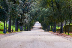 Green park. Running man Royalty Free Stock Photo