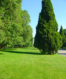Green park and sky. Summer day in an Australian park royalty free stock photography