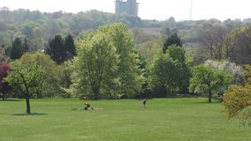 Green Park in Sunny Day. Video stock video