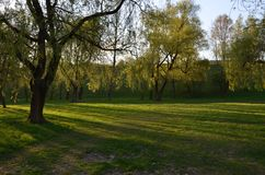 Green park in the sunshine. In the evening Royalty Free Stock Photo