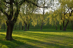 Green park in the sunshine. In the evening Stock Image