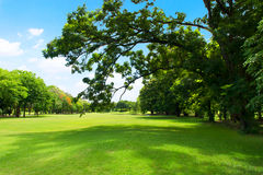 Green park and tree with blue sky Stock Images
