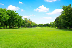 Green park and tree with blue sky Royalty Free Stock Photography