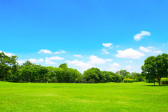 Green park and tree with blue sky Royalty Free Stock Photos