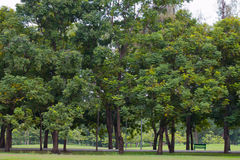 Green park with trees and grass in park. Royalty Free Stock Image