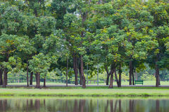 Green park with trees and grass beside pond in park. Royalty Free Stock Photography