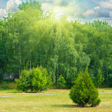 Green park with trees and grass Royalty Free Stock Photo