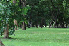 Green park with trees and grass. Stock Photography