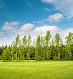 Green park trees over blue sky. Spring grass field Royalty Free Stock Photography