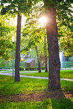 Green park trees sun Royalty Free Stock Image