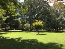 Green park. In a university capus Stock Photo
