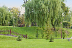 Green park with willow tree in Grodno, Belarus Stock Images
