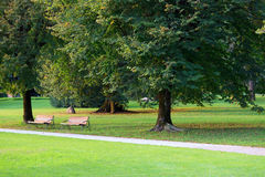 Green Park With Two Benches Stock Photo