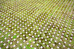 Green parking surface with moss and grass Stock Photos