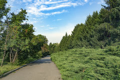 Green Parkway Royalty Free Stock Photo