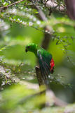 The green parrot Stock Photography