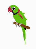 Green parrot. A green parrot on a branch Stock Illustration