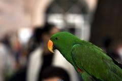 Green parrot. One green parrot, bird animal, yellow beak royalty free stock image