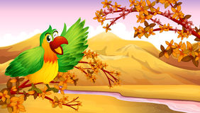 A green parrot in an autumn scenery Stock Photography
