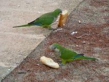 Green Parrot bird animal Royalty Free Stock Photo