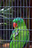 Green parrot in cage. Feeling like you need to get away? - A brightly colorful exotic parrot behind the steel bars of a cage. This tropical bird is from South stock images