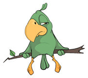 Green parrot cartoon. The green parrot with a yellow beak sits on a branch Royalty Free Stock Image
