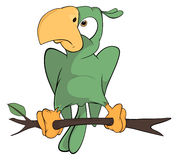 Green parrot cartoon Stock Image