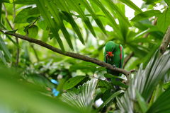 Green parrot eating food on tree branch. Tropical rainforest. Wildlife nature. Royalty Free Stock Photography