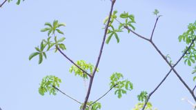 Green parrot flying from tree