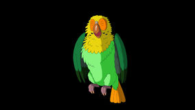 Green Parrot Gets Angry. Classic Handmade Animation with Alpha Channel. stock video