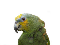 Green parrot isolated. Green parrot close-up isolated over white Royalty Free Stock Photos