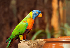 Green parrot near the feeders, eating fruit. Stock Photo