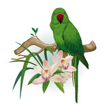 Green parrot and Orchid flowers Stock Photos